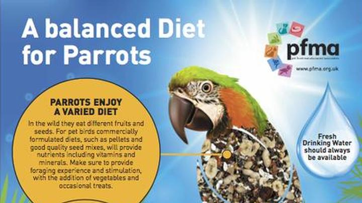 A Balanced Diet For Parrots Poster