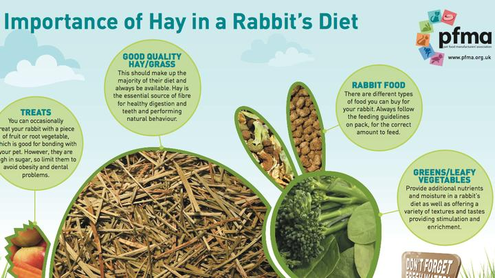 The Importance of Hay Poster